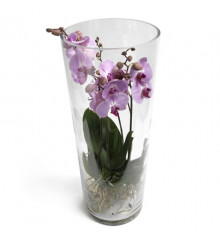 Trendy Orchid